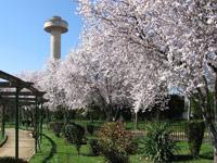 Parque la Fiesta del Árbol