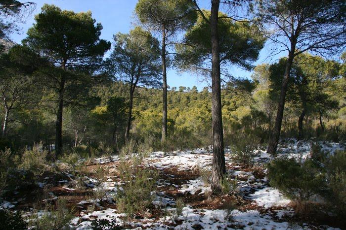 Sendero de Los Siete Hermanos de Sierra Espuña