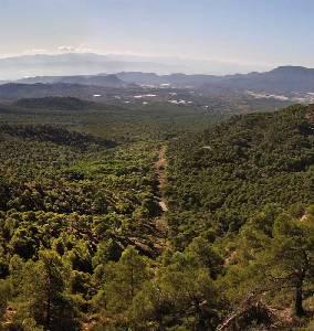 Sendero de Lentisco y Barranco de Los Ballesteros de Sierra Espuña