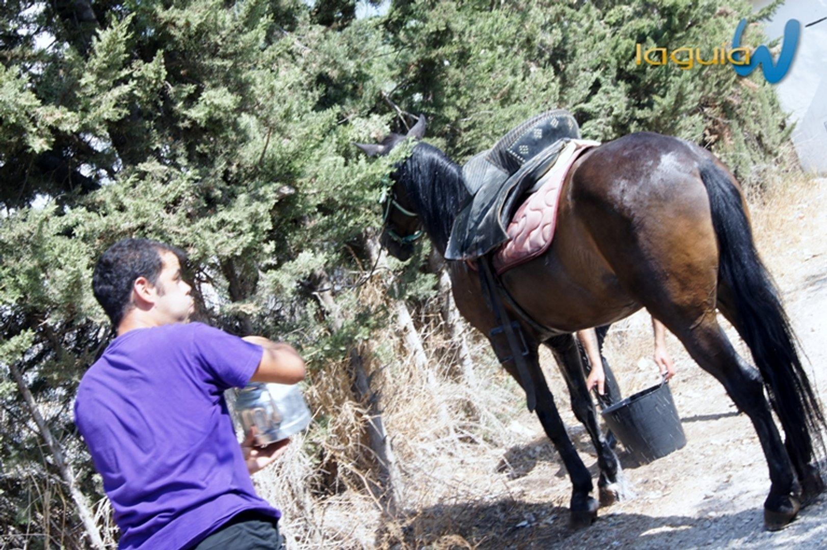 Romeria rociera 2012 archena - En transito